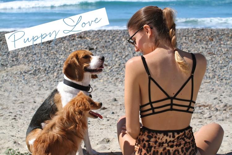 One Teaspoon Bikini, Cute Dogs, Carlsbad CA