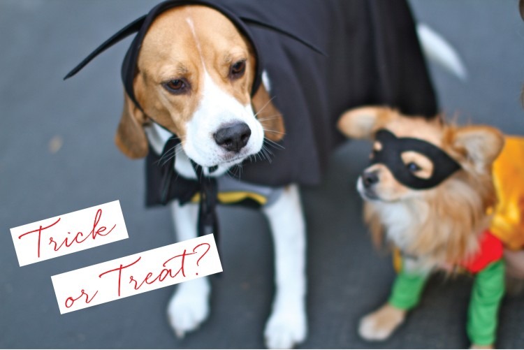 Dogs on Halloween, Batman and Robin Costumes, Cute Dog Costumes, Beagle Costume