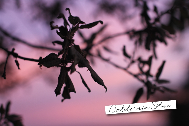 Carlsbad, Fall Sunset, California